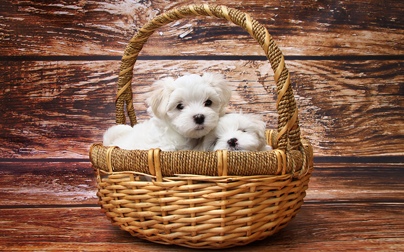 Events and Puppy Socialisation